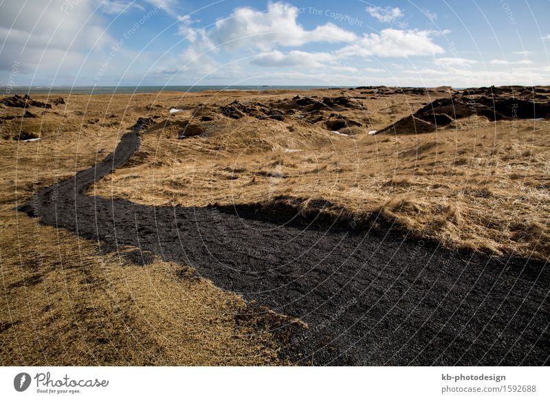 Wide lens capture of Iceland, peninsula Snaefellsness Nature Landscape Plant Animal Going Vacation & Travel Hiking wide volcanic ground meadow west Snæfellsnes