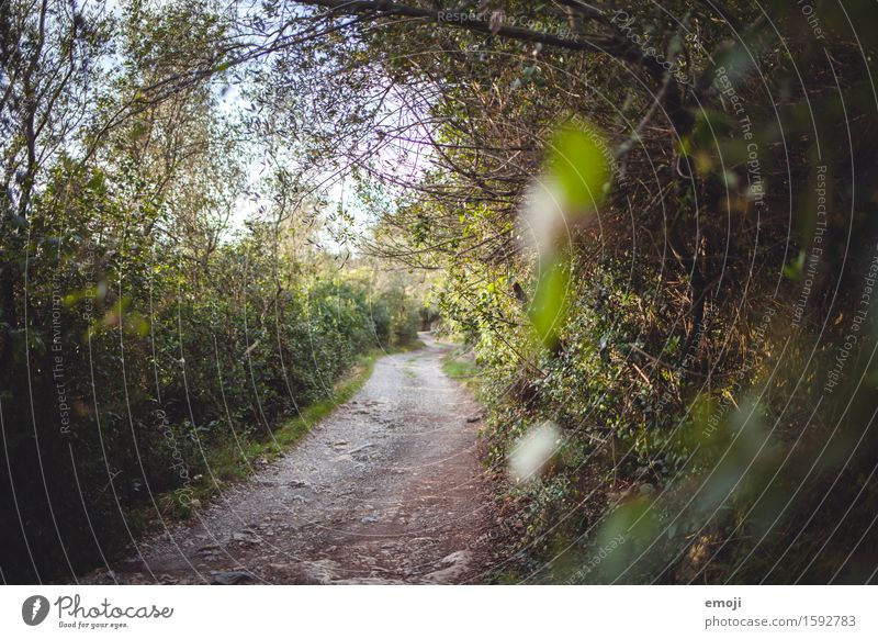 path Environment Nature Landscape Summer Beautiful weather Bushes Forest Natural Green Lanes & trails Footpath Colour photo Exterior shot Deserted Day