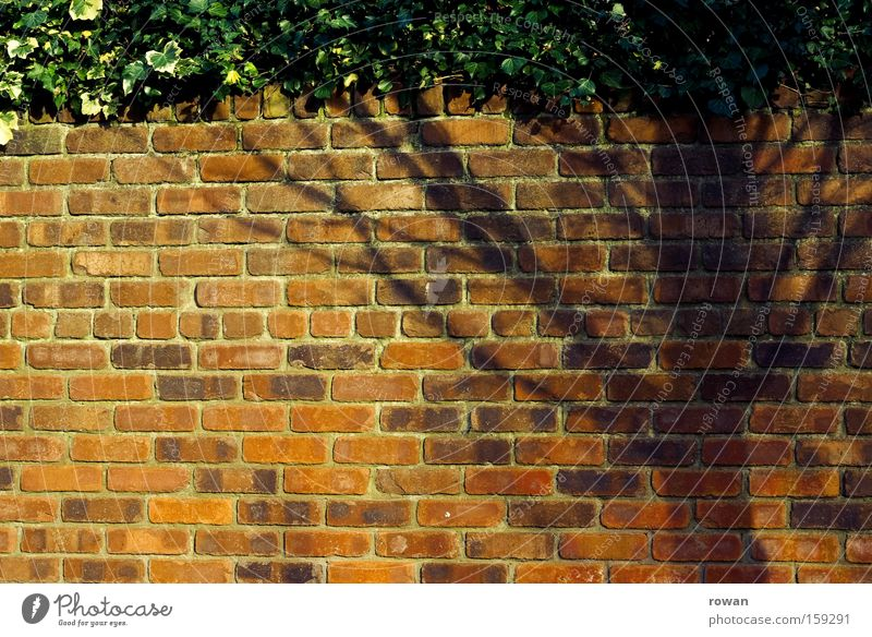 Tree Red Wall (building) Garden Wall (barrier) Brick Border Hedge Illusion