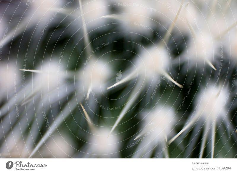White Green Star (Symbol) Retro Desert Point Cactus Thorn Thorny