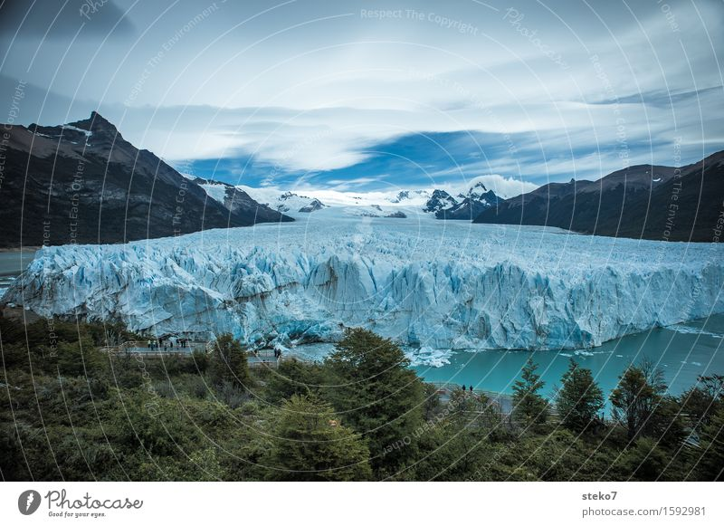Perito Moreno Glacier Ice Frost Forest Mountain Coast Fjord Sharp-edged Gigantic Cold Blue White Climate Change Edge Glacier tongue Deserted Copy Space top