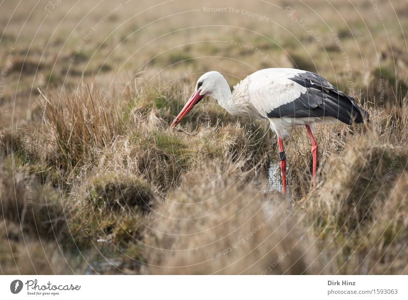 Stork & Frog Food Environment Nature Landscape Plant Animal Meadow Bog Marsh Eating To feed Delicious Natural Voracious Success Transience White Stork