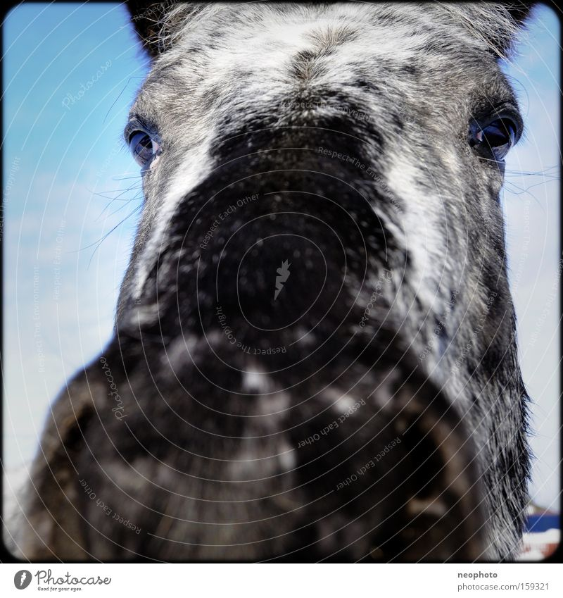 Mr. Ed Horse Stupid Curiosity Nose Pelt Animal Eyes Large Grief Gray (horse) Narrow Penitentiary Wide angle Exterior shot Pasture Mammal Sadness