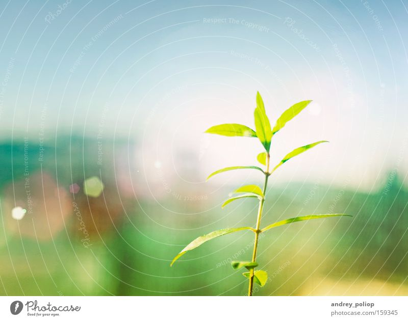 little sprig Nature Tree Green Plant Yellow Colour Spring Bright