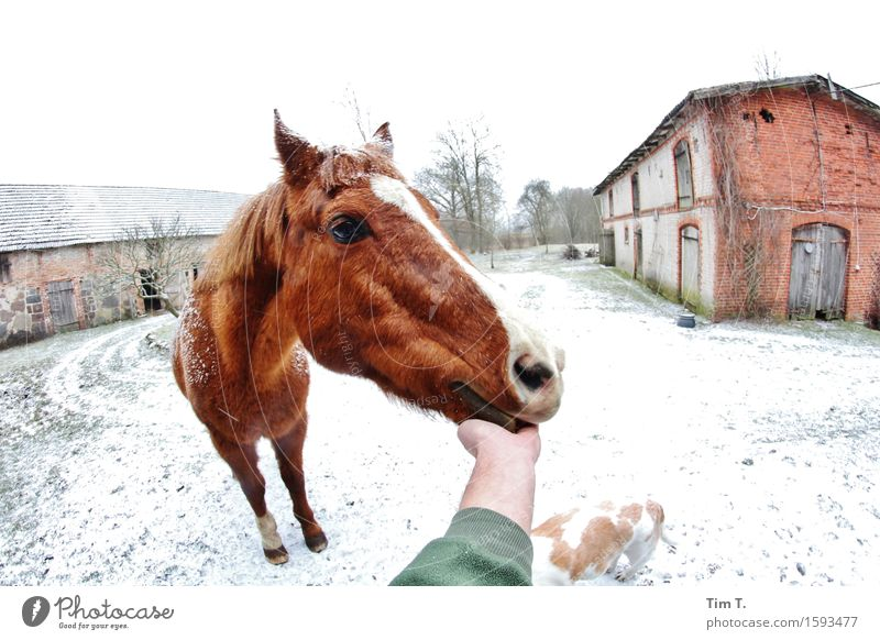 Good boy Animal Horse 1 Contentment Winter Farm Dog Hand Colour photo Exterior shot Day