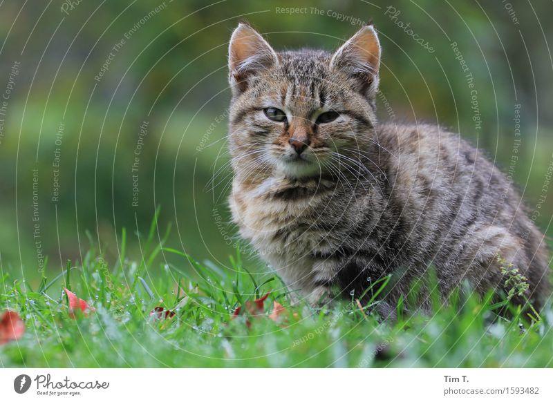 Cat Beautiful Calm Animal Emotions Freedom Farm Spring fever