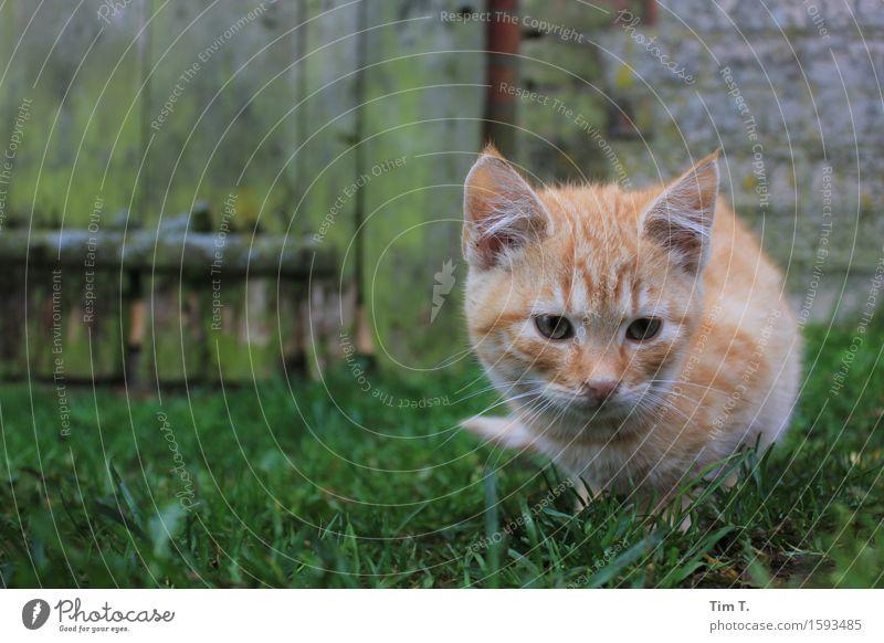 Cat Animal Senior citizen Farm Pet