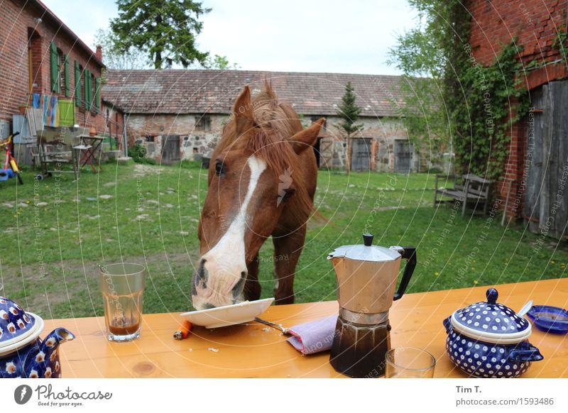 Animal Joy Coffee Horse Farm Breakfast Farm animal