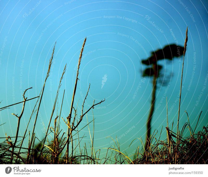 western beach Western Beach Coast Tree Pine Grass Wind cripple Darss Sky Nature Baltic Sea Colour