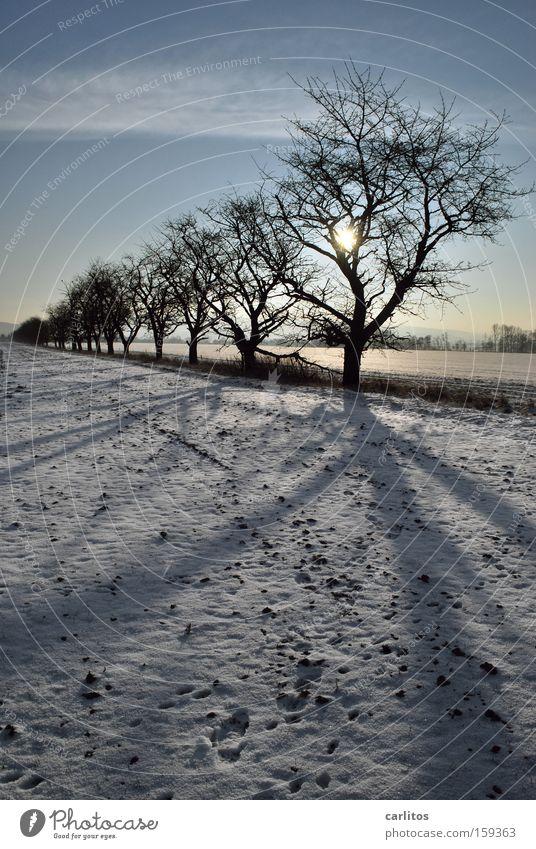 Tree Winter Far-off places Snow Arrangement Whimsical Beaded Winter walk