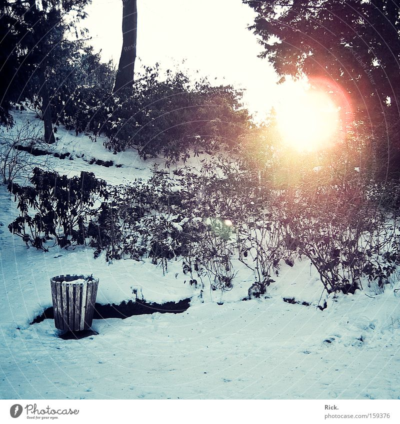 Winter is gone. Colour photo Exterior shot Deserted Light Shadow Sunbeam Central perspective Senses Relaxation Calm Snow Garden Nature Sky Ice Frost Warmth