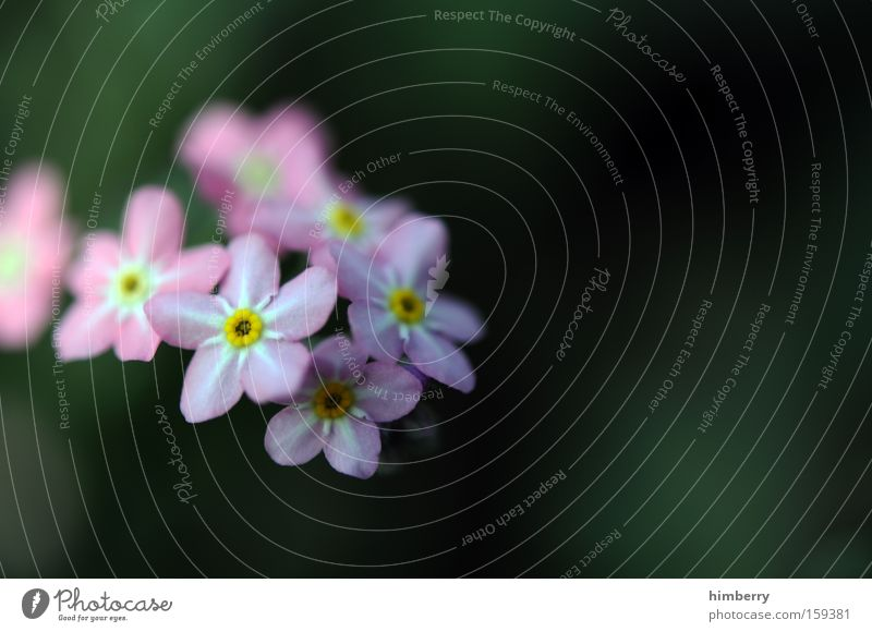 Nature Plant Beautiful Flower Spring Blossom Background picture Park Fresh Esthetic Floristry Horticulture