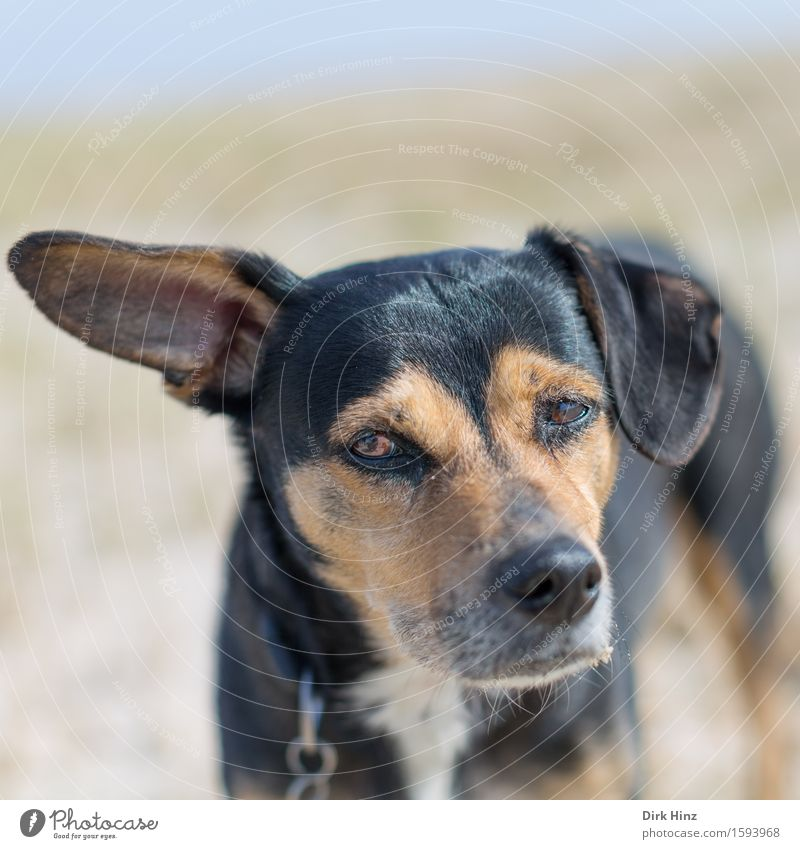 I beg your pardon? Nature Landscape Animal Pet Dog 1 Emotions Moody Sadness Fatigue Disappointment Fear Mistrust Snout Ear Pelt Leashed Wait Dreary Listening