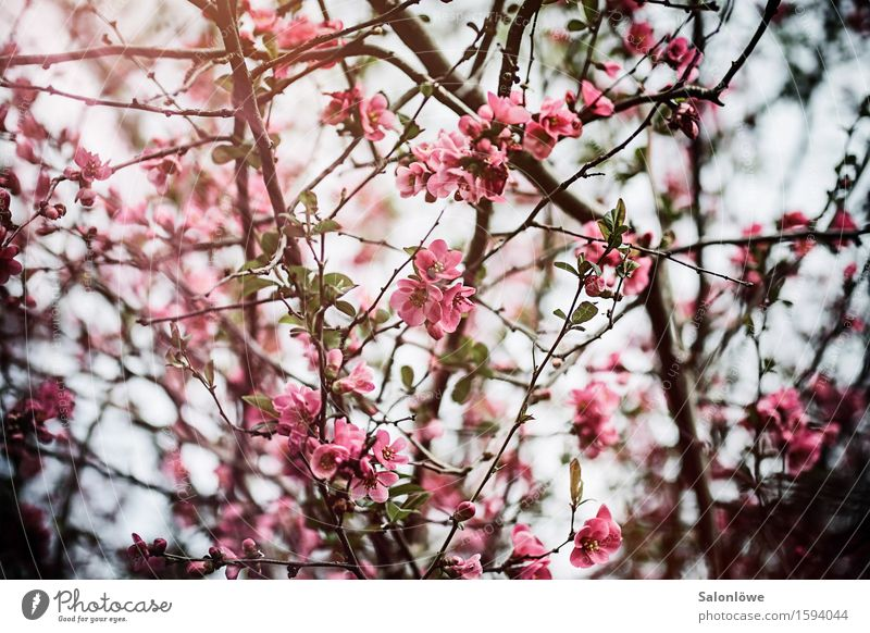 flower magic Nature Plant Sunlight Spring Beautiful weather Bushes Leaf Blossom Garden Park Natural Warmth Pink Fragrance Contentment Flower Colour photo