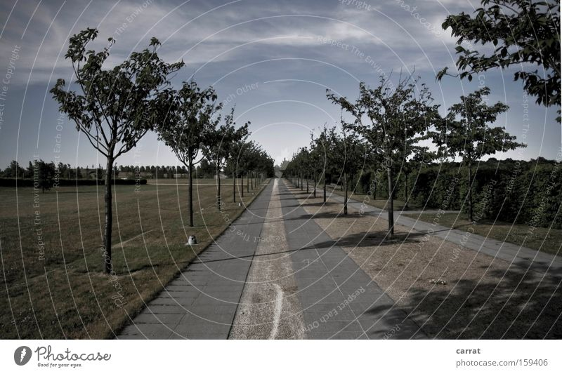 Tree Cold Meadow Line Park Arrangement Clarity Row Considerable Geometry Direct Avenue Demanding