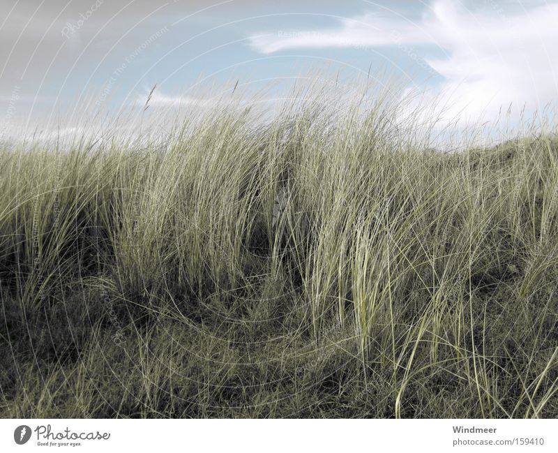 in the North Sea breeze Beach Ocean Landscape Plant Sky Clouds Wind Grass Coast Natural Beach dune Netherlands Dreary Walcheren Dune Subdued colour