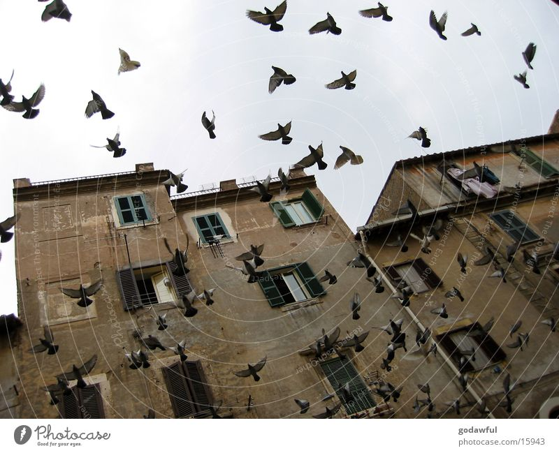 Bird Facade Europe Italy Rome Old building Judder