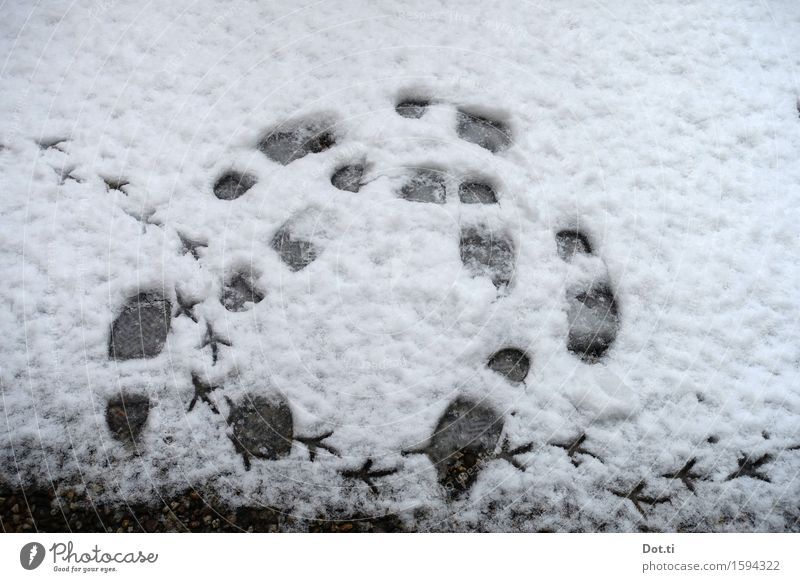 roundabout Winter Snow Animal tracks Going Hiking Cold Funny Round Movement Footprint bird trail Circle Colour photo Subdued colour Exterior shot Deserted