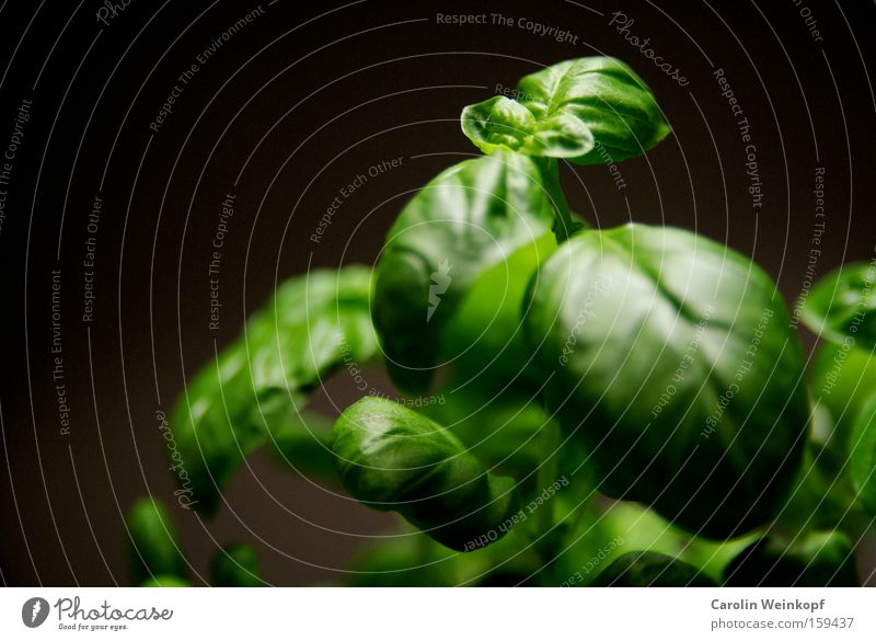 Green Plant Leaf Black Food Healthy Fresh Good Kitchen Simple Cooking & Baking Herbs and spices Delicious Foliage plant Rachis Vegetarian diet