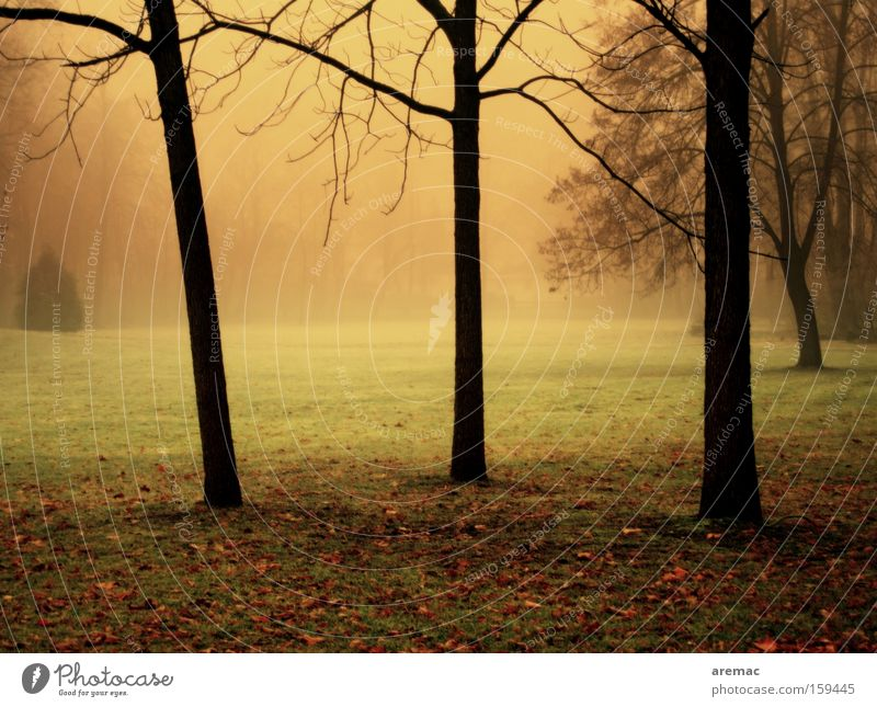 trees in the fog Fog Light Moody Nature Tree Landscape Morning Colour Grass Autumn Park