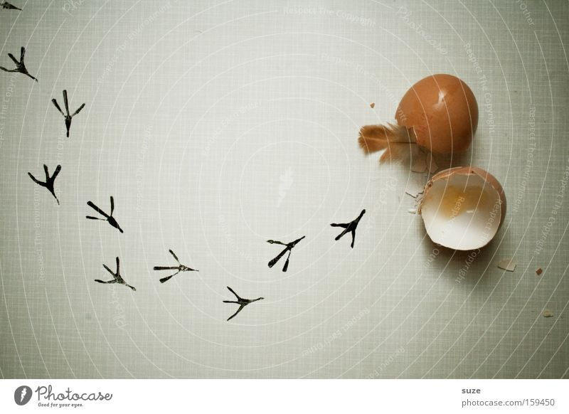 Life Beginning Fresh Feather New Creativity Idea Tracks Footprint Whimsical Egg Organic produce Diet Fasting Birth Vegetarian diet
