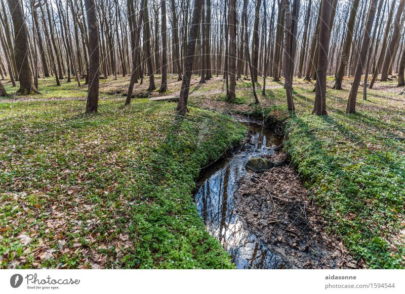 """ghost forest Nature Landscape Beautiful weather Forest Joy Contentment Attentive Caution Patient Calm """"ghost forest trees Book ommen coastal forest Nienhagen"""