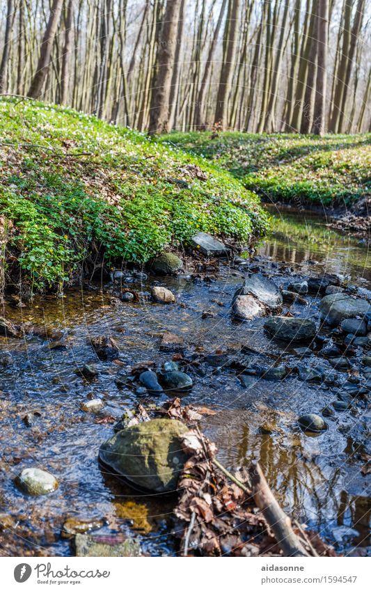 Nature Plant Water Landscape Calm Joy Forest Spring Contentment Serene Brook Caution Patient
