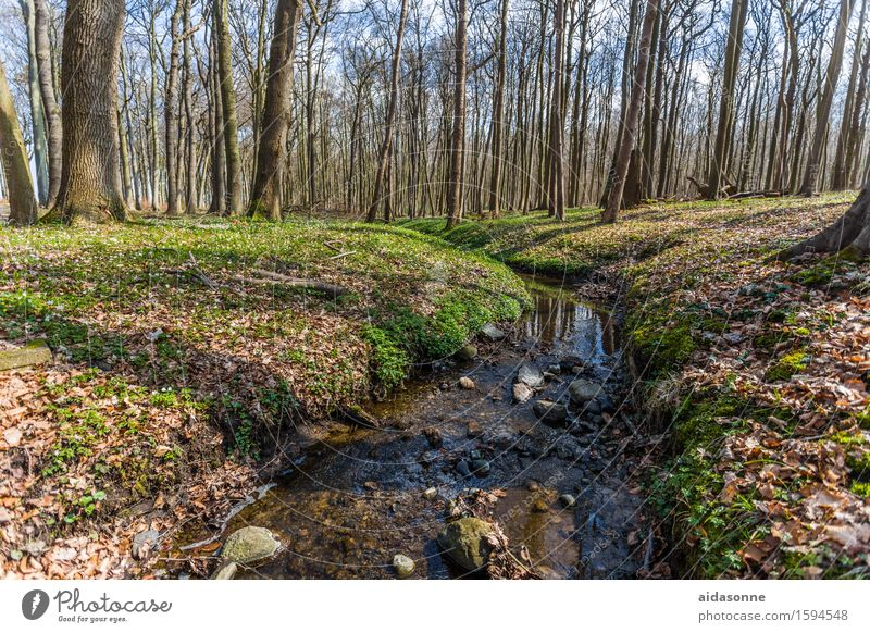 Nature Landscape Calm Forest Contentment Serene Caution Patient