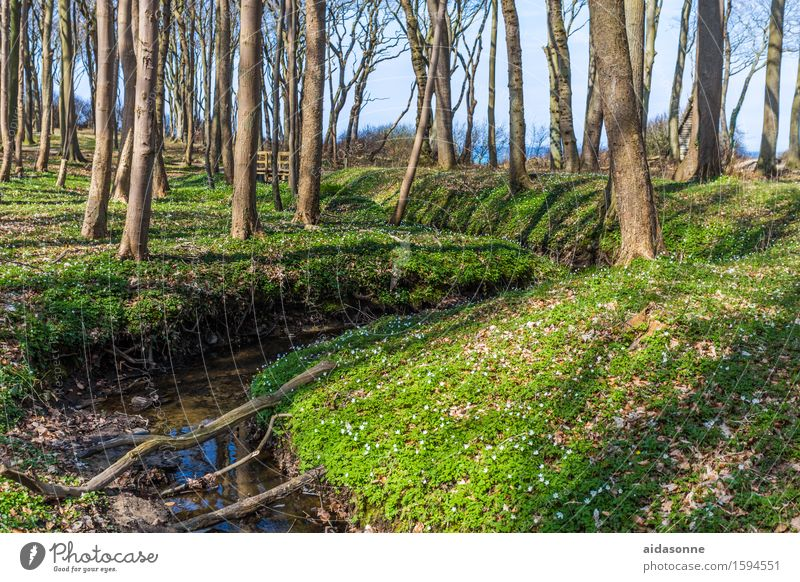 Landscape Calm Forest Spring Contentment Joie de vivre (Vitality) Beautiful weather Baltic Sea Serene Brook Caution Spring fever Attentive Ghost forest
