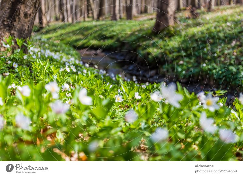 Nature Plant Landscape Calm Forest Blossom Spring Happy Serene Caution Patient Attentive