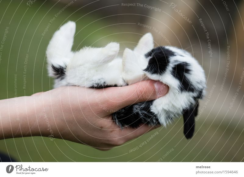 so small ... Girl Infancy Hand Fingers 1 Human being 8 - 13 years Child Pet Animal face Pelt Paw baby hare Pygmy rabbit Mammal Rodent Snout Baby animal