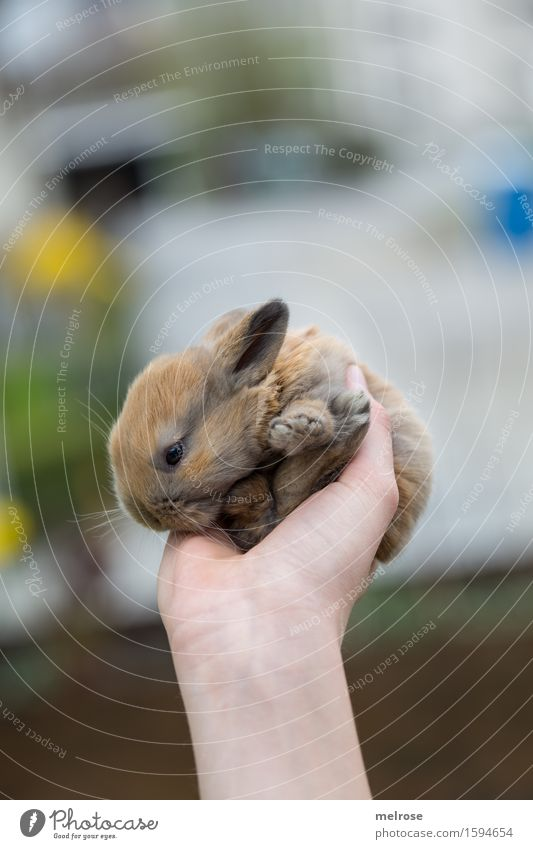 a new day ... Girl Arm Hand 1 Human being 8 - 13 years Child Infancy Spring Flower Garden Pet Animal face Pelt Paw Pygmy rabbit baby hare Rodent Mammal