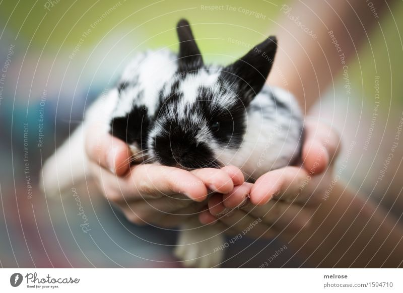 Rabbit babies 12 days old Child Girl Infancy Hand Fingers 8 - 13 years Animal Animal face Paw hare babies Pygmy rabbit Mammal Rodent Snout Baby animal