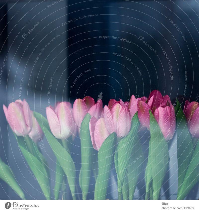 Flower Blue Window Spring Garden Pink Glass Decoration Plastic Tulip False Artificial