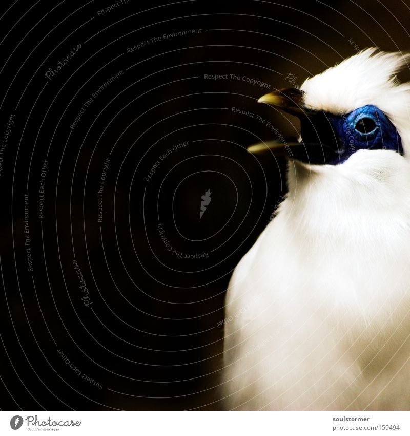 Nature White Black Eyes Nutrition To talk Food Small Bird Flying Aviation Grief Avaricious Animal Macro (Extreme close-up)