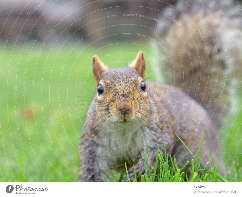 Nature Green Animal Meadow Natural Wild animal Curiosity Squirrel