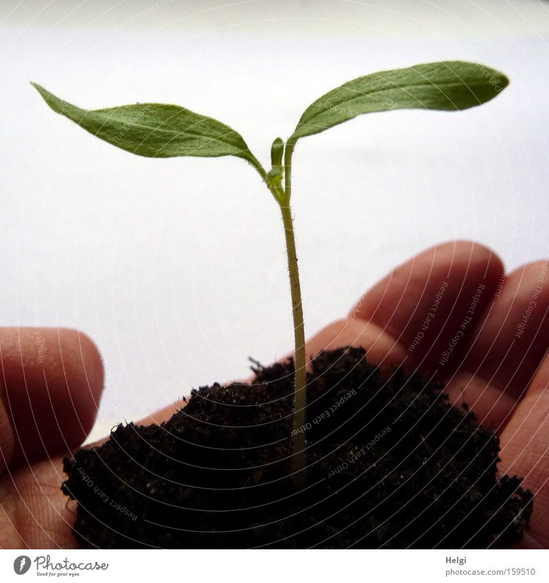 young plant with soil in one hand Colour photo Close-up Shadow Garden Gardening Hand Fingers Nature Plant Earth Spring Leaf Foliage plant Agricultural crop Park