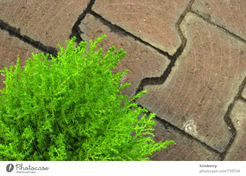 green stone Plant Cobblestones Paving stone Stone Stone floor Garden Garden path Park Green Curbside Tree nursery Coniferous trees Spring garden and landscaping