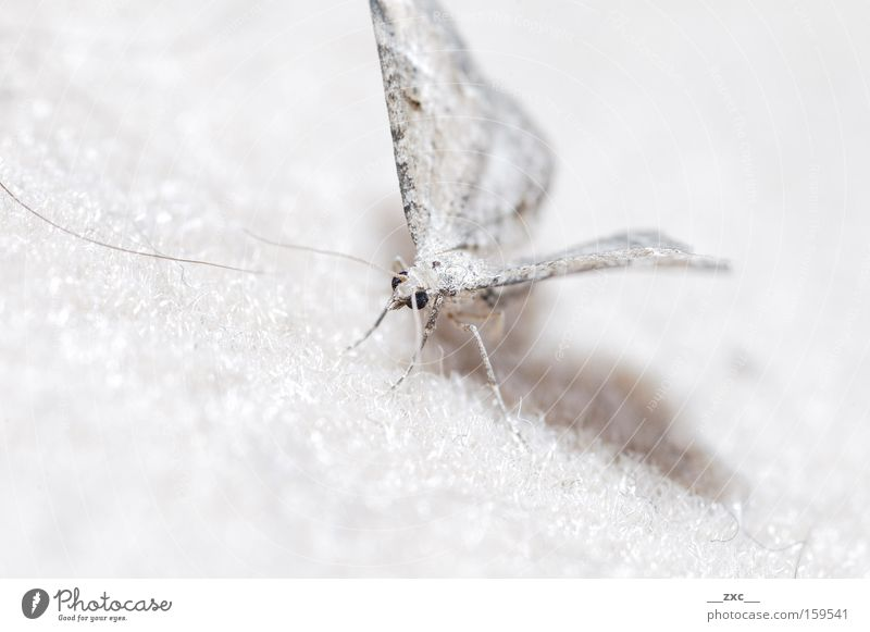 \-/ Nature Beautiful White Movement Elegant Flying Insect Butterfly Animal