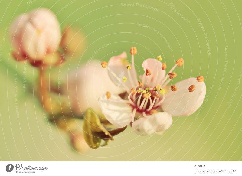Nature Green Eroticism Blossom Spring Natural Happy Garden Pink Design Park Elegant Illuminate Esthetic Beginning Blossoming