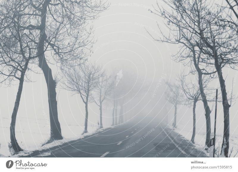 Tree Cold Street Snow Gray Fog Bleak Avenue Median strip