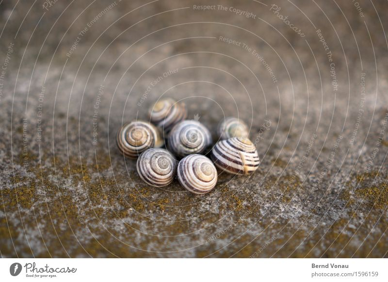 catchment Dead animal Group of animals Emotions Cute Spiral Snail shell Housing Together Circle Death Empty left Stone Concrete Moss Accumulate Round Green