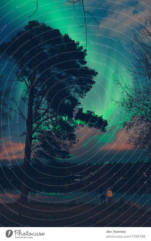 aurora.112 Nature Landscape Plant Water Sky Cloudless sky Night sky Stars Autumn Beautiful weather Aurora Borealis Tree Garden Lakeside Fjord Observe Illuminate
