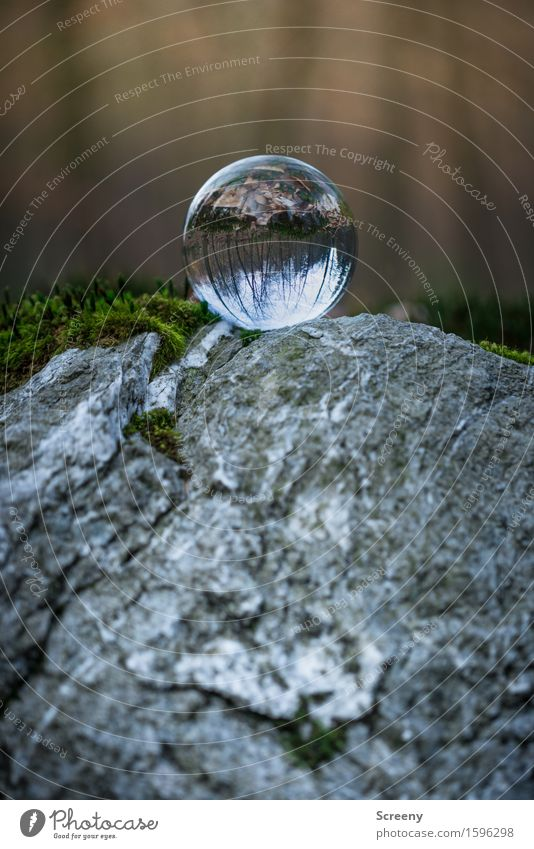 over the top Nature Landscape Spring Moss Forest Rock Round Gray Serene Patient Calm Self Control Crystal ball Glass ball Colour photo Exterior shot Close-up