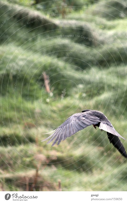 Nature Green Black Animal Meadow Freedom Grass Coast Bird Power Flying Trip Beginning Feather Wing Departure
