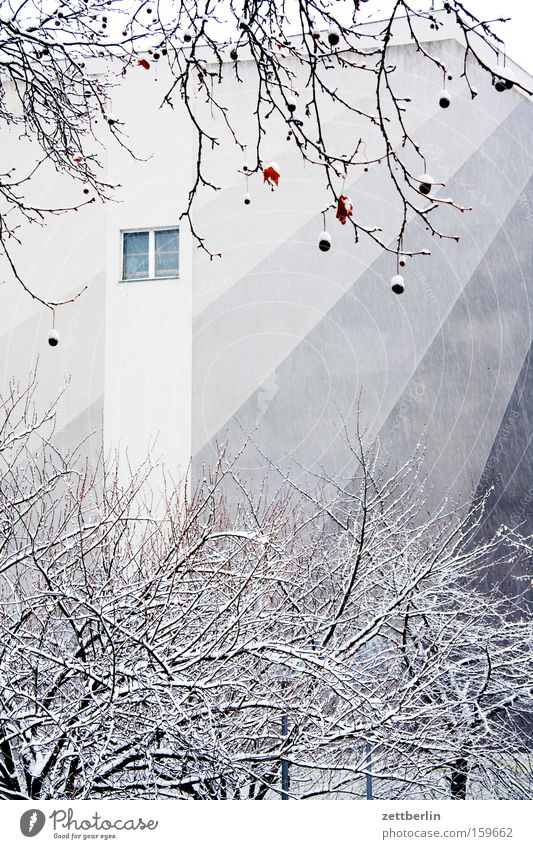 Colour Tree House (Residential Structure) Winter Window Snow Wall (barrier) Building Fashioned Town house (City: Block of flats) Fire wall Snow layer