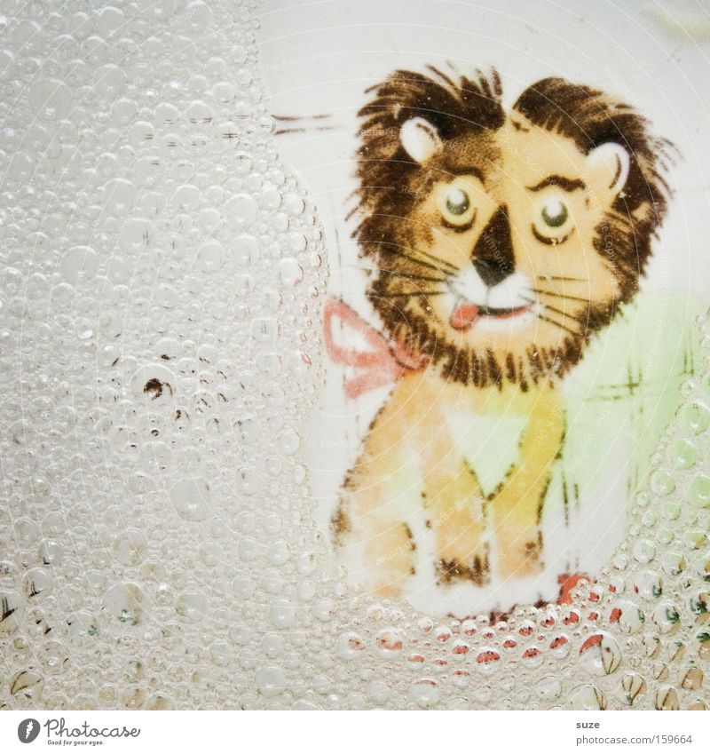lion beer Crockery Plate Infancy Water Funny Clean Lion Kiddy's plate Do the dishes Bubble Detergent Foam Colour photo Multicoloured Interior shot Deserted