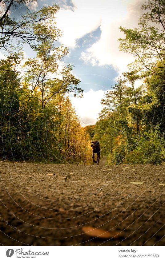 It tilts... Lanes & trails Autumn Dog Asphalt Forest Tree October Hound Animal To go for a walk Clouds Sky Walking Leaf Mammal Street dog