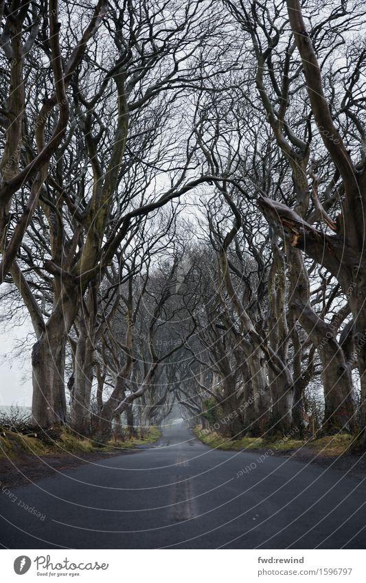 Tree Landscape Cold Street Sadness Spring Autumn Lanes & trails Horizon Rain Gloomy Walking To enjoy Threat Adventure Mysterious