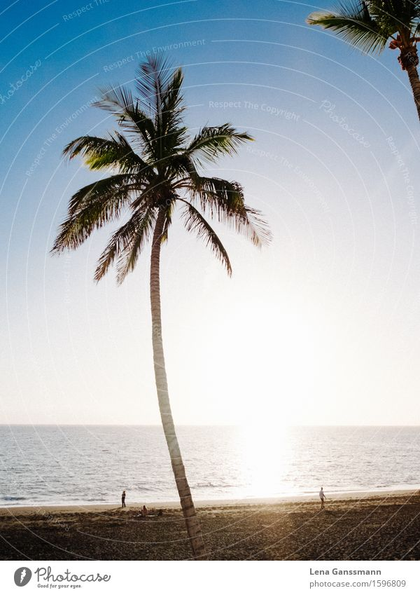 Palms in Puerto Noos Wellness Harmonious Contentment Relaxation Calm Meditation Vacation & Travel Tourism Far-off places Summer Summer vacation Sun Sunbathing